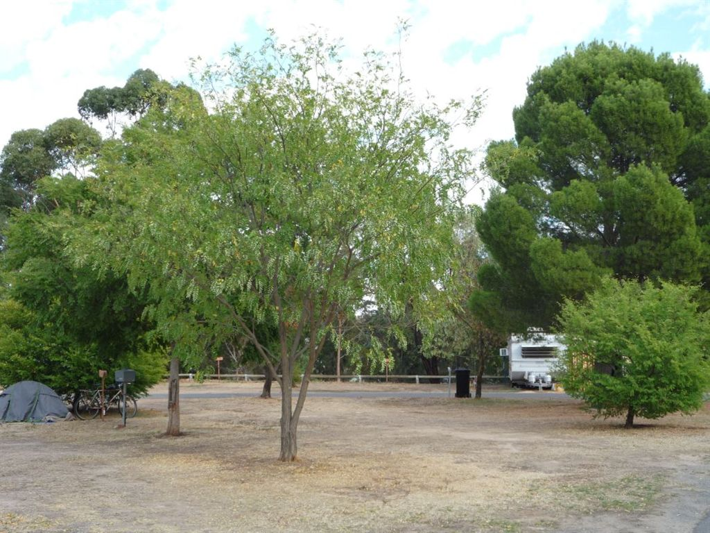 Part of camping and caravan area. Lots of shade.