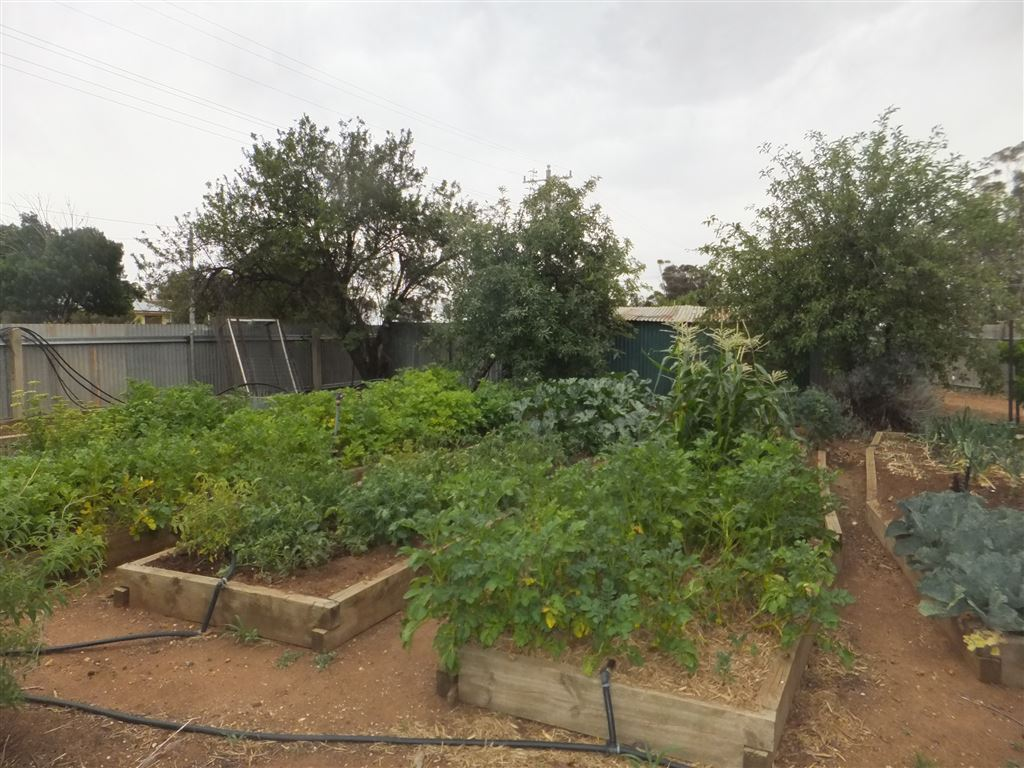 Enormous established veggie patch & orchard with established fruit & nut trees(grapes, locut, apples, plums, nectarines, peaches, walnuts, pistachios, almonds)