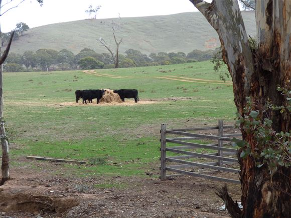 Hobby Farm Block or City Escape