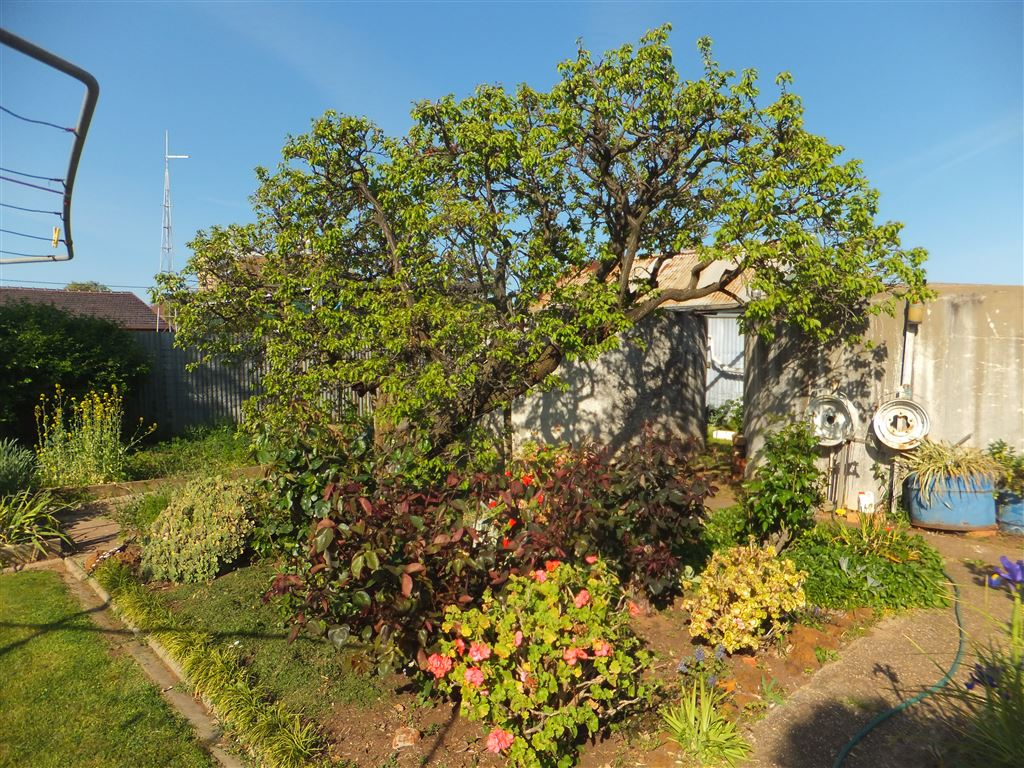 Apricot tree, roses, vege patches & two large rainwater tanks
