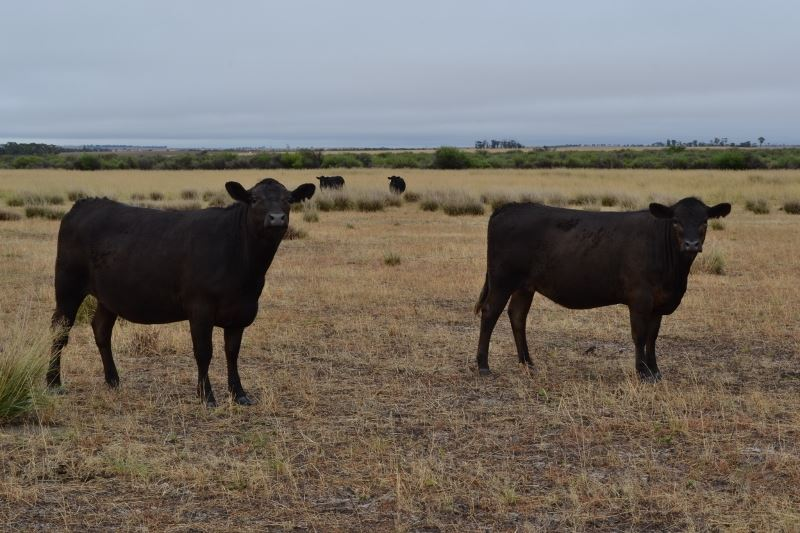Looking for a Cattle Farm?