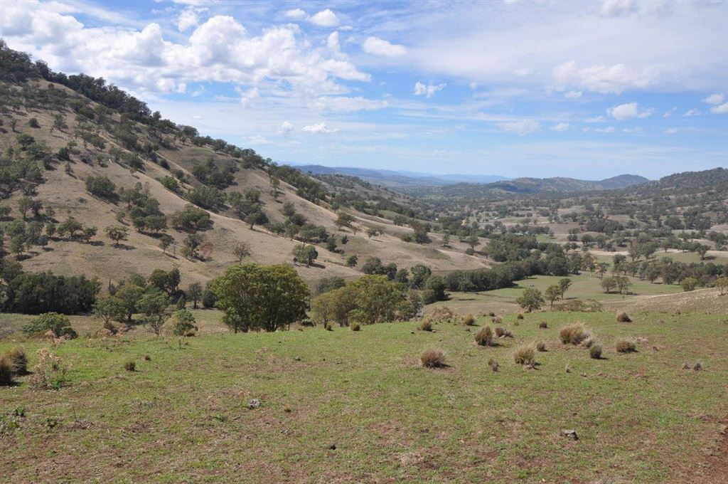 777 acres with frontage to Dartbrook Creek