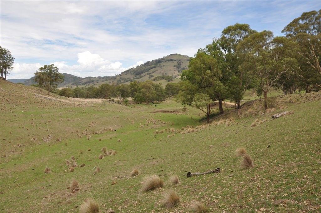Easy care grazing property, close to Scone
