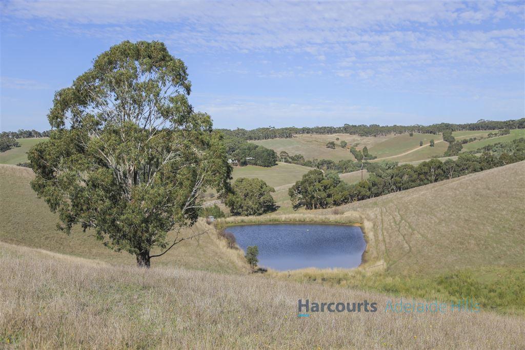 """Eucalyptus Hills""- McHarg Creek Valley"