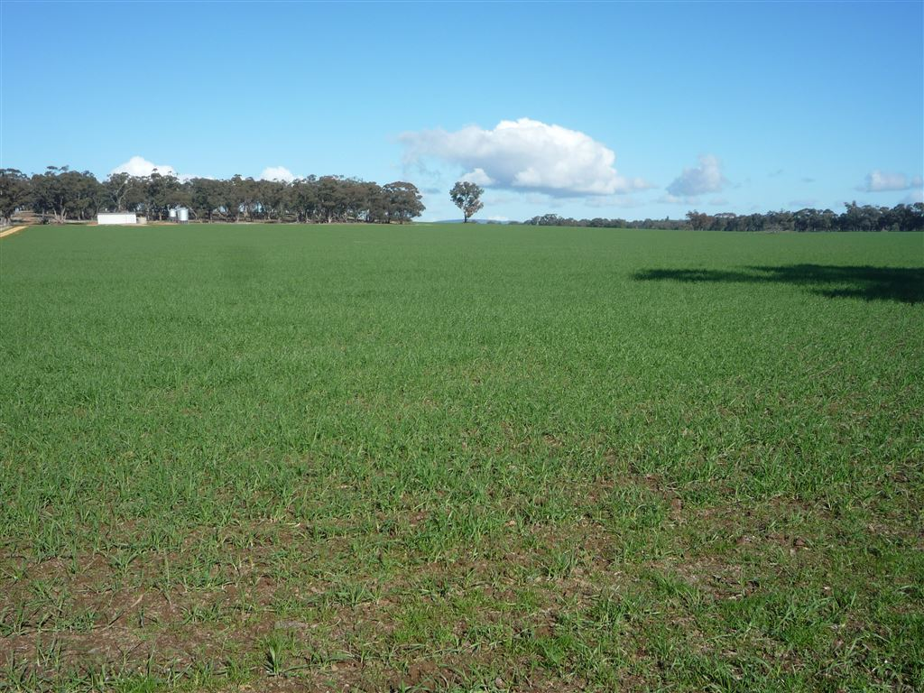 More Current Photos of crop sown
