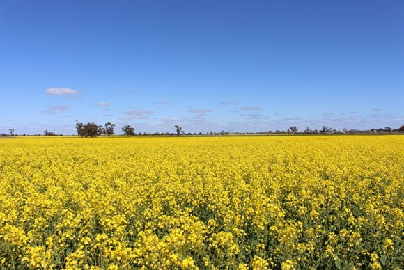 Quality Cropping and Grazing + Irrigation - Price Reduced!!