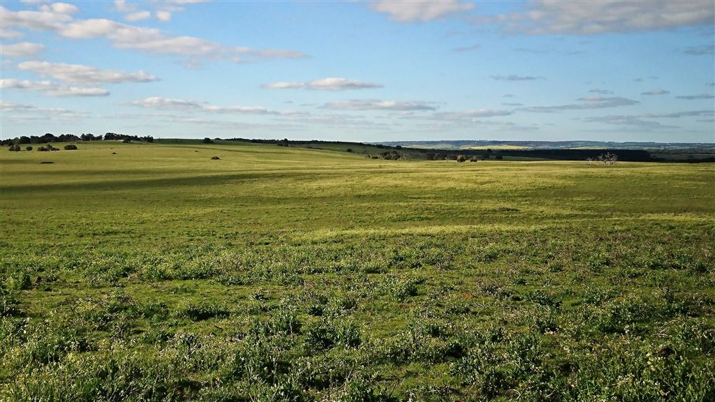 Vacant Land- Ideal for Cropping and Grazing