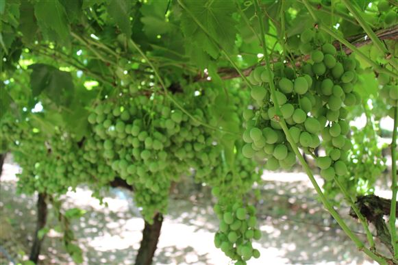 Fruit Bearing Operation Tutunup/Busselton