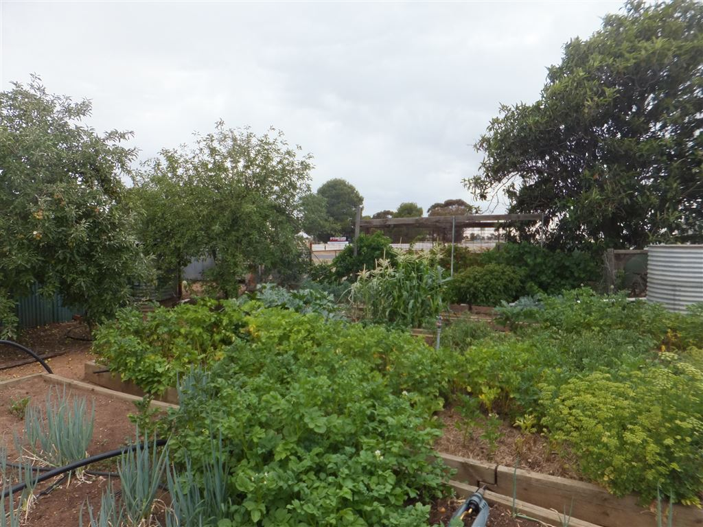 Second view of established veggie patch & orchard, with full watering system connected