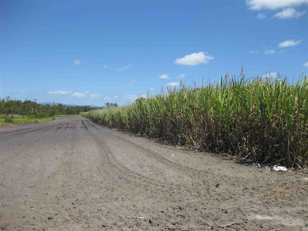 View of part of property, now fallow (part of cane block 15A and adjacent part of cane block15B)