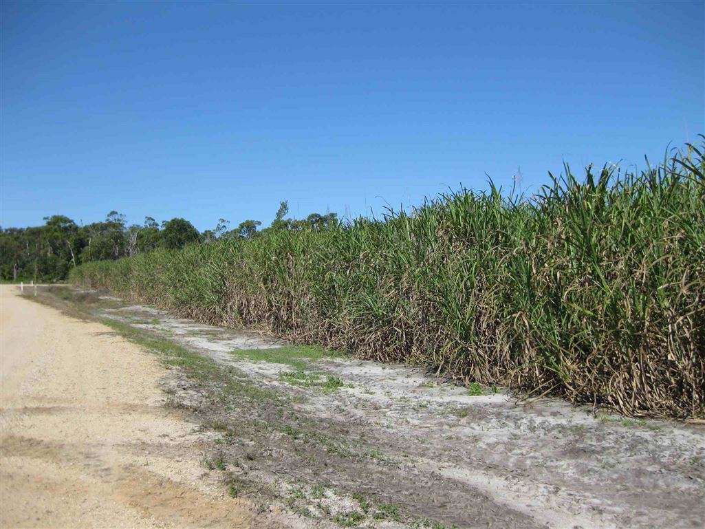View of part of property under cane (part of cane block 12), photo 1