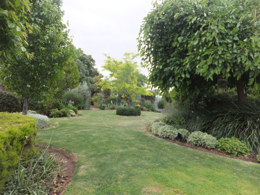 Beautiful garden oasis with full watering system, fruit trees(peach, lemon, mulberry + more), vegetable garden & lots of areas for families to enjoy