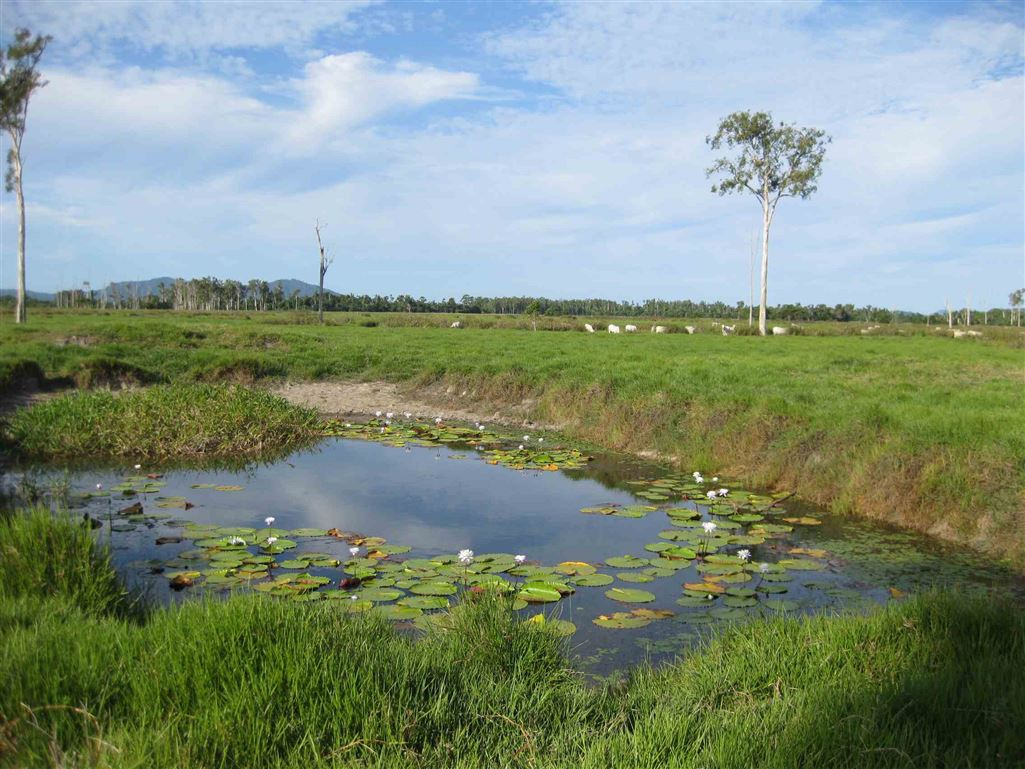 View of part of a waterhole on property, photo 1 (livestock excluded)