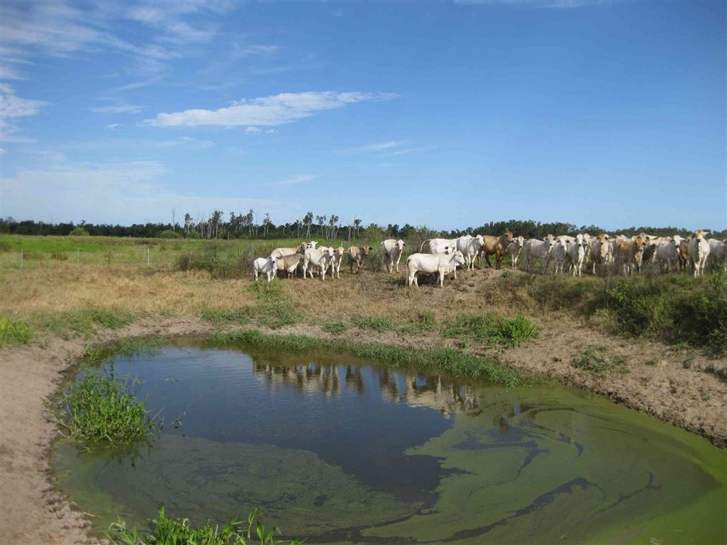 View of part of a waterhole on property, photo 2 (livestock excluded)