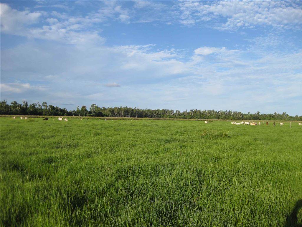 View of part of property, photo 1 (livestock excluded)