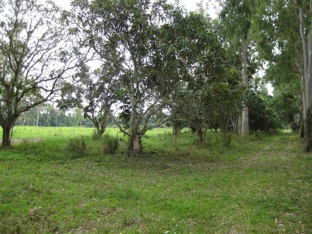 View of part of Mango Orchard