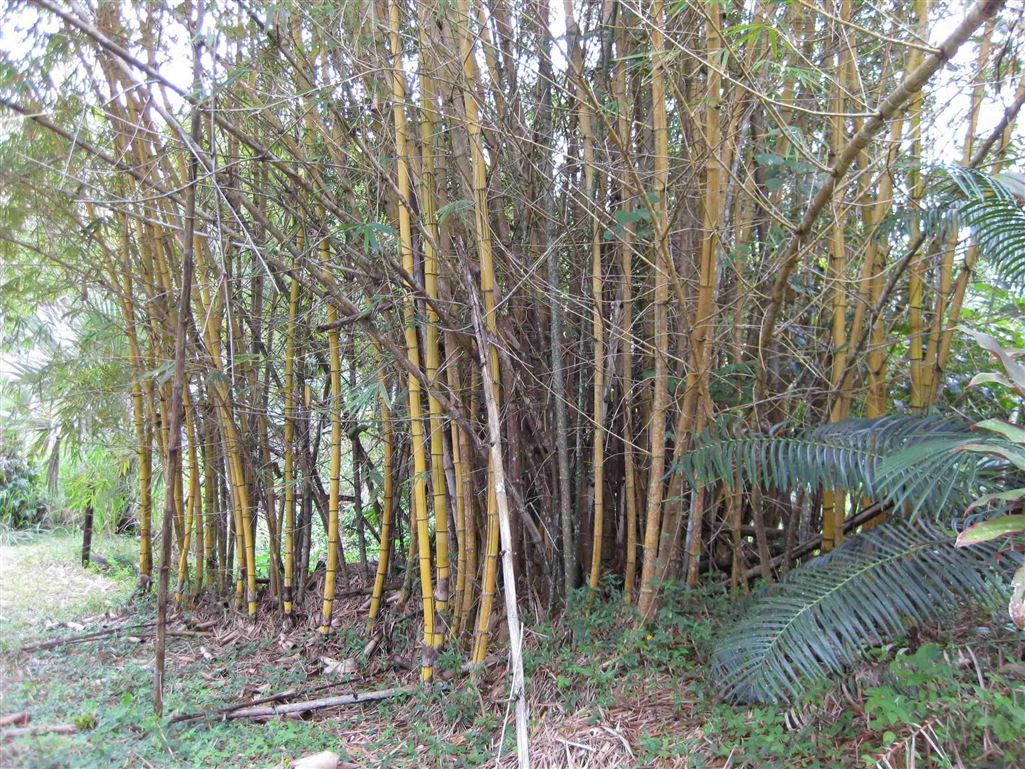 View showing some Bamboo on the property, photo 1