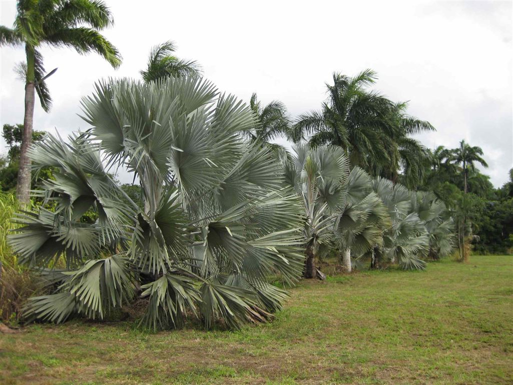 View showing some Bismarck Palms on the property, photo 1