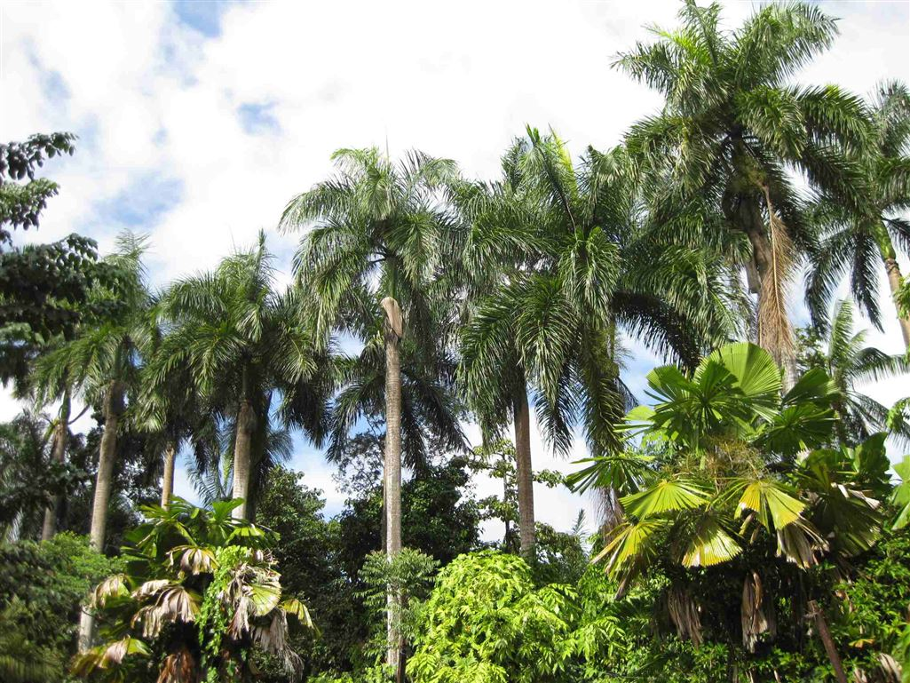 View showing part of some Palms on the property, photo 1