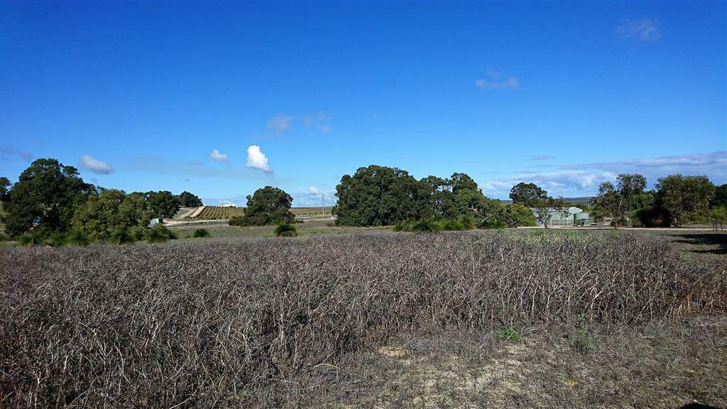 pasture paddocks