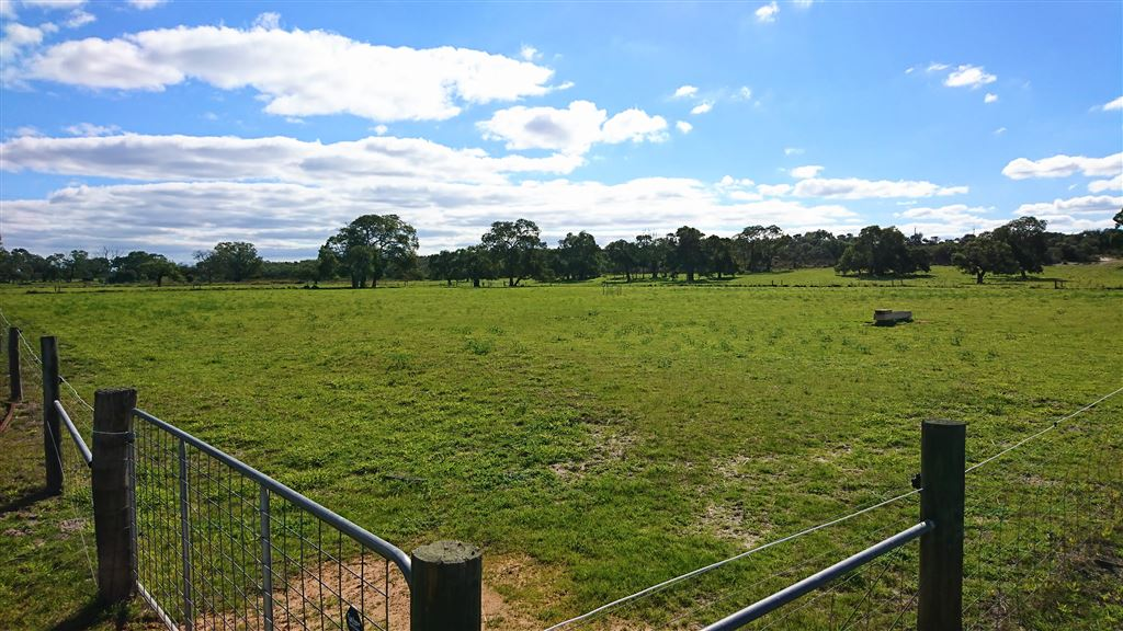 horse- cattle paddocks