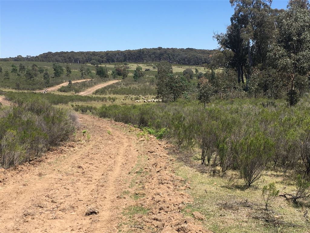 Good graded tracks provide easy access around the property.
