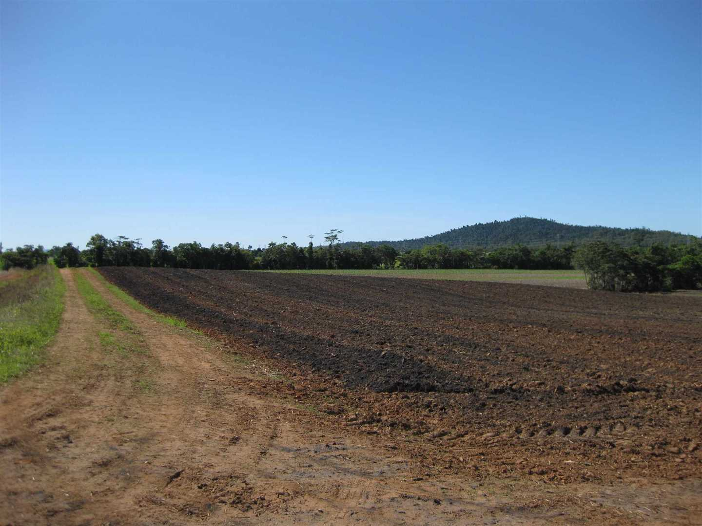 Lot 1, view of part of property when part fallow (now under cane), photo 1