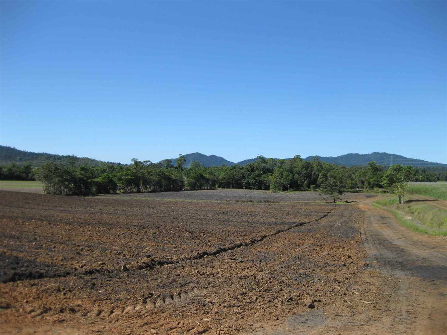 Lot 1, view of part of property when part fallow (now under cane), photo 2