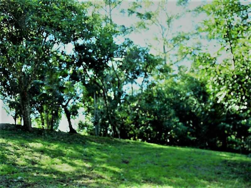 Create your own Rainforest Retreat!