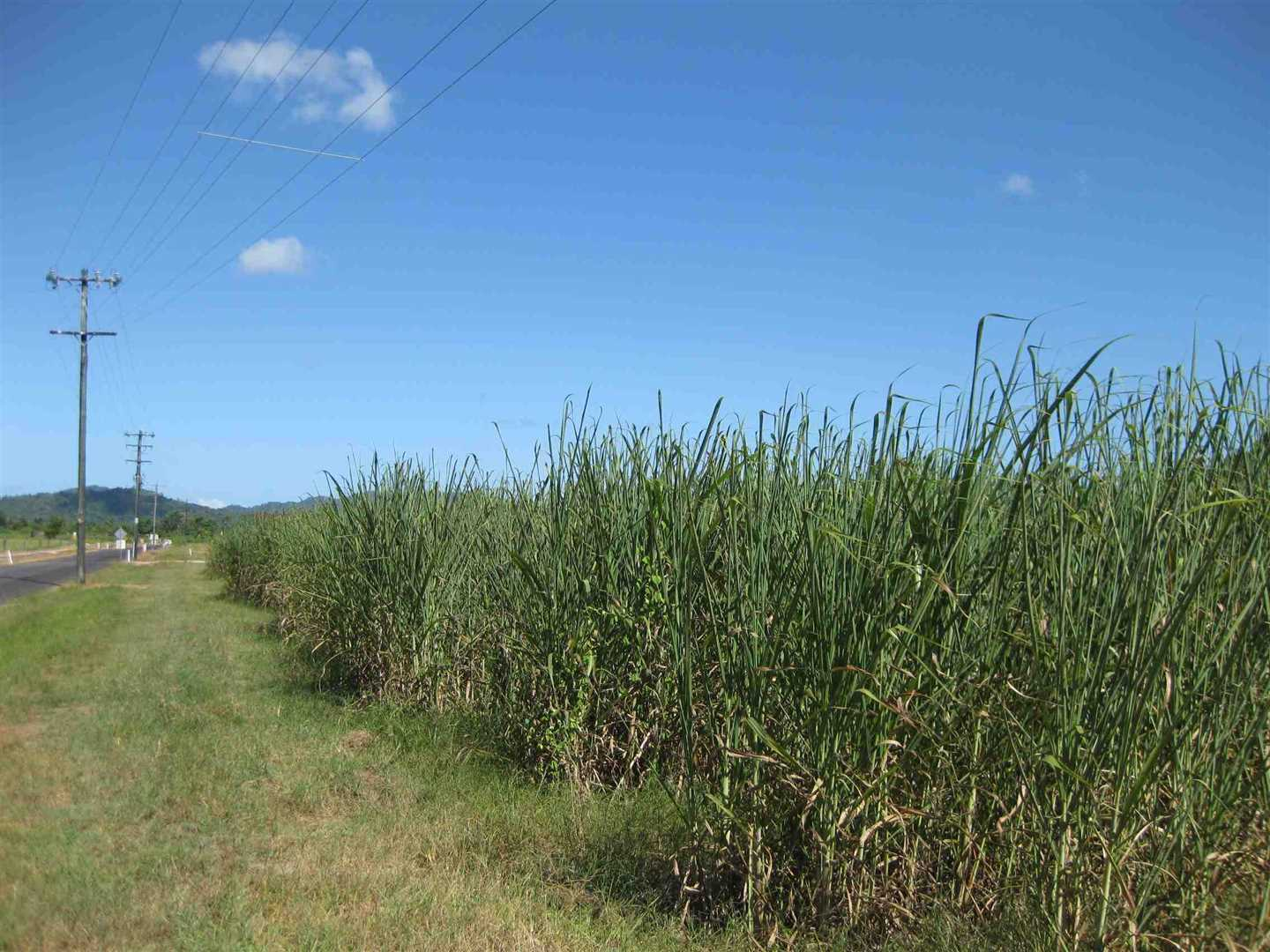 View of part of property (cane crop excluded), photo 3