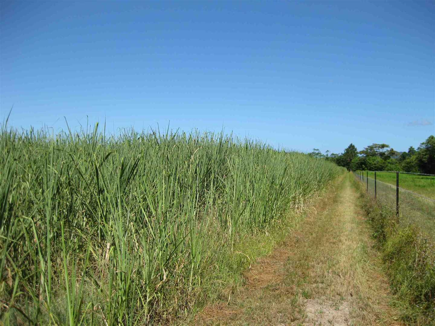 View of part of property (cane crop excluded), photo 6