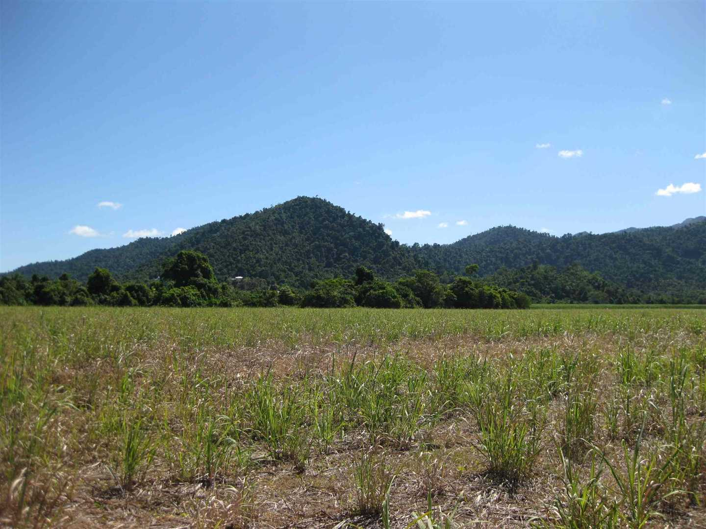 View of part of property showing part of previous fallow cane block (now under cane) and mountain views