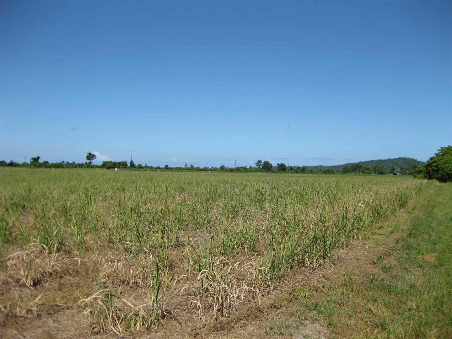 View of part of property showing part of fallow cane block