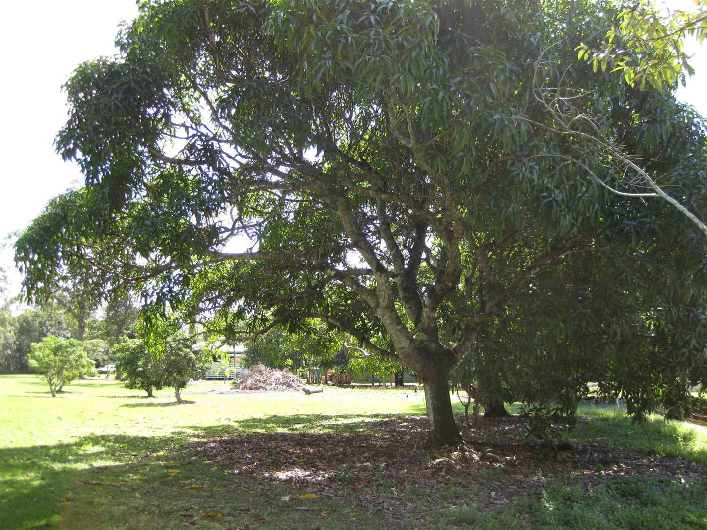 View of part of property showing some fruit trees, photo 2