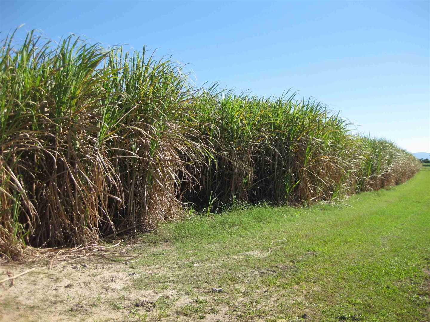 View of part of property showing part of cane crop, photo 3