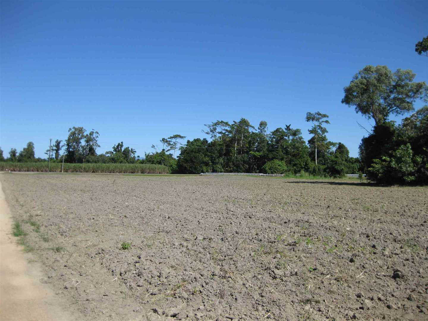 View of part of property showing part of fallow cane land, photo 2