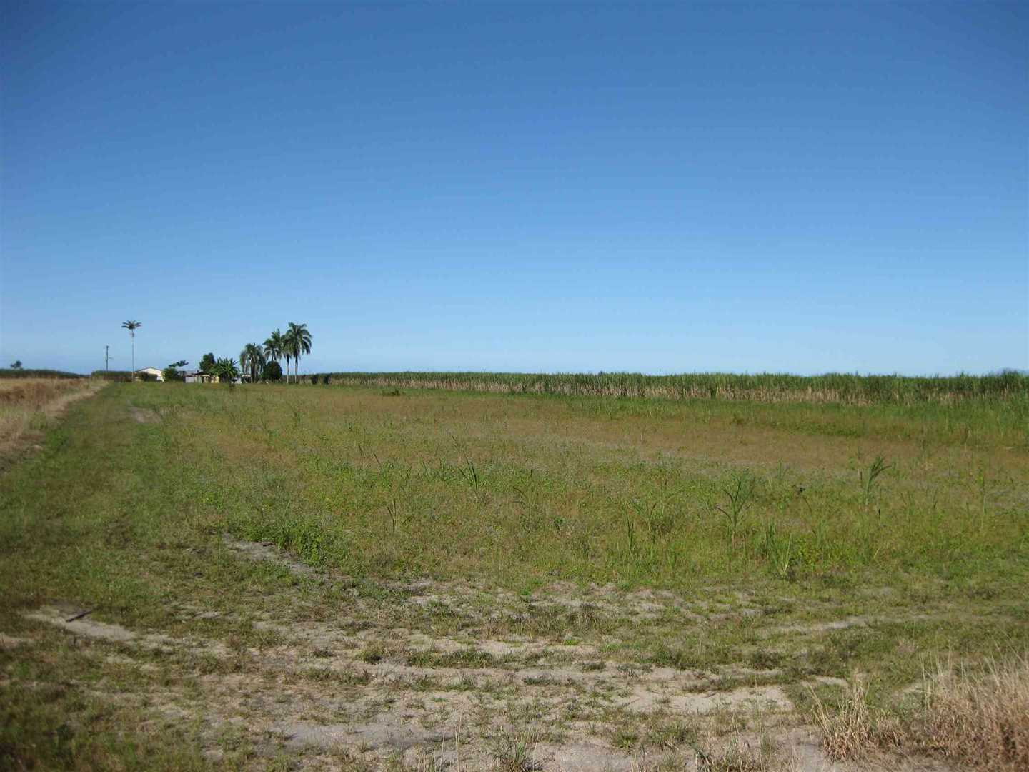 View of part of property showing part of fallow cane land, photo 3