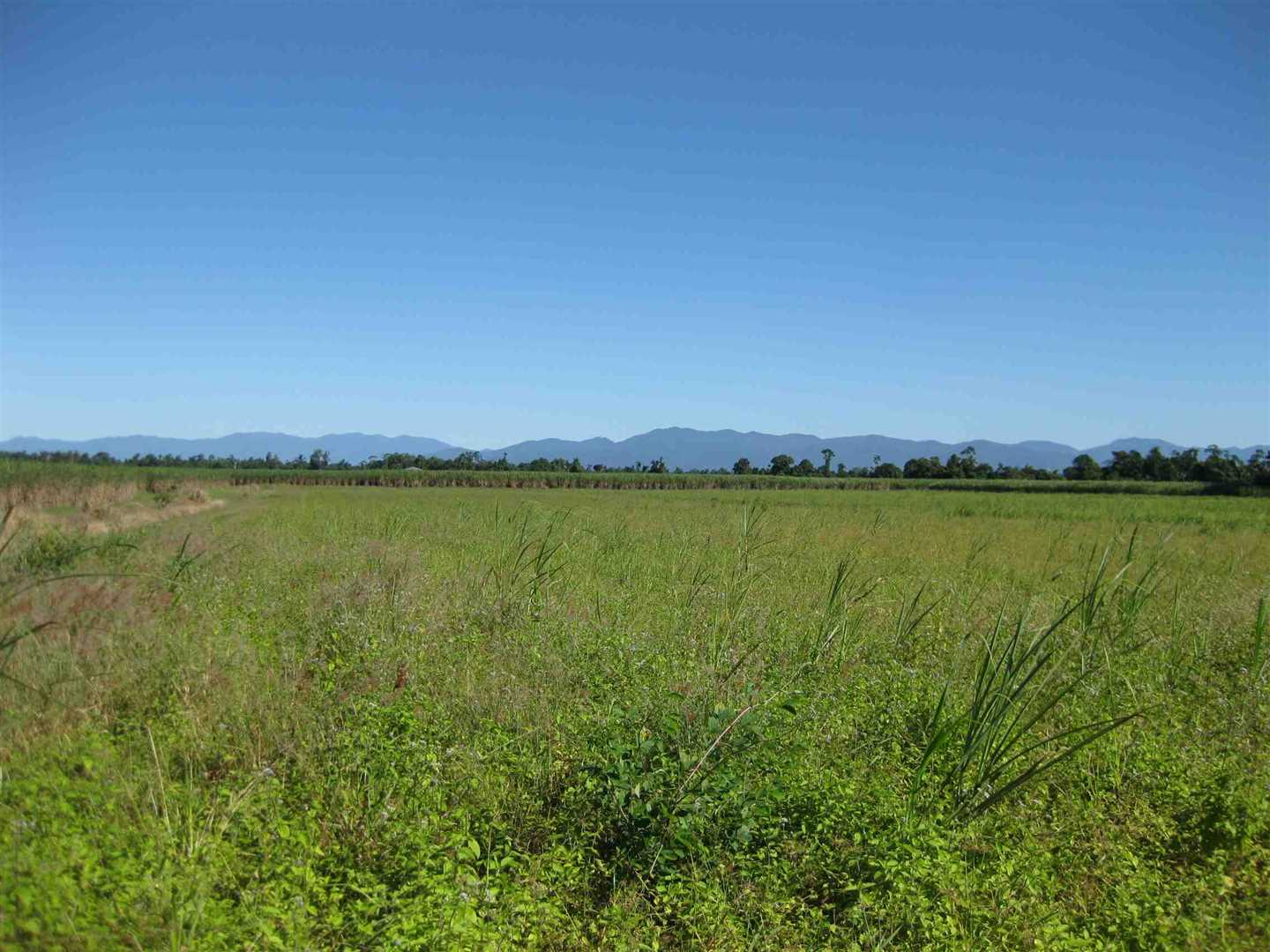View of part of property showing part of fallow cane land, photo 4