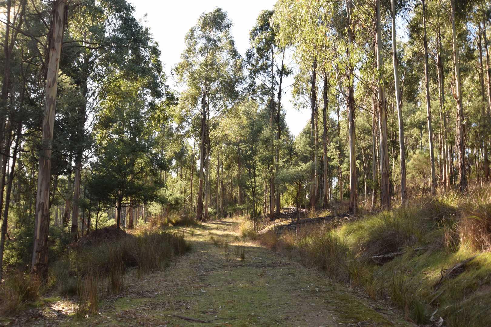 'East Meander 2' - Bush Block - Meander - 16ha (40ac)