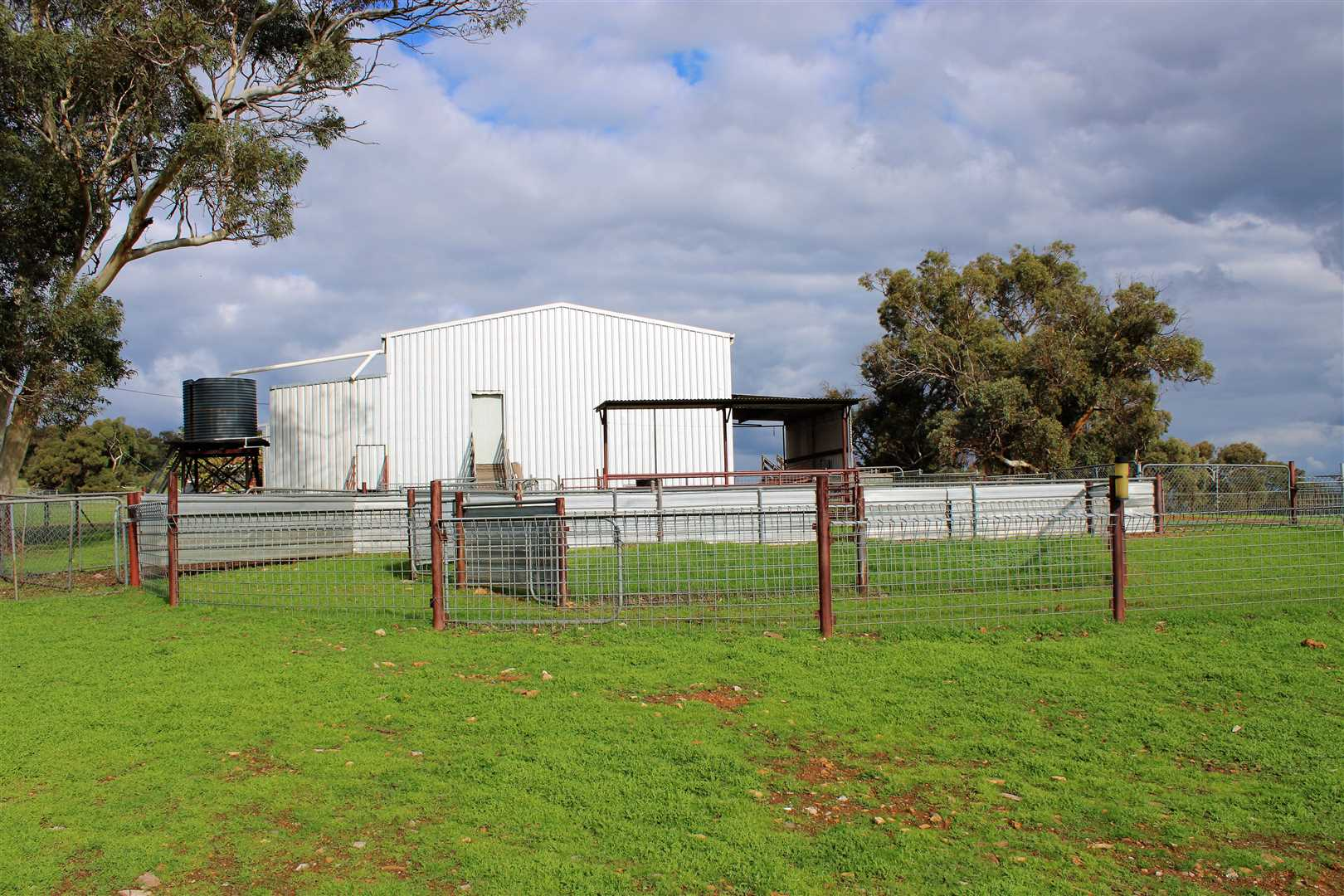 Yards and Shearing shed