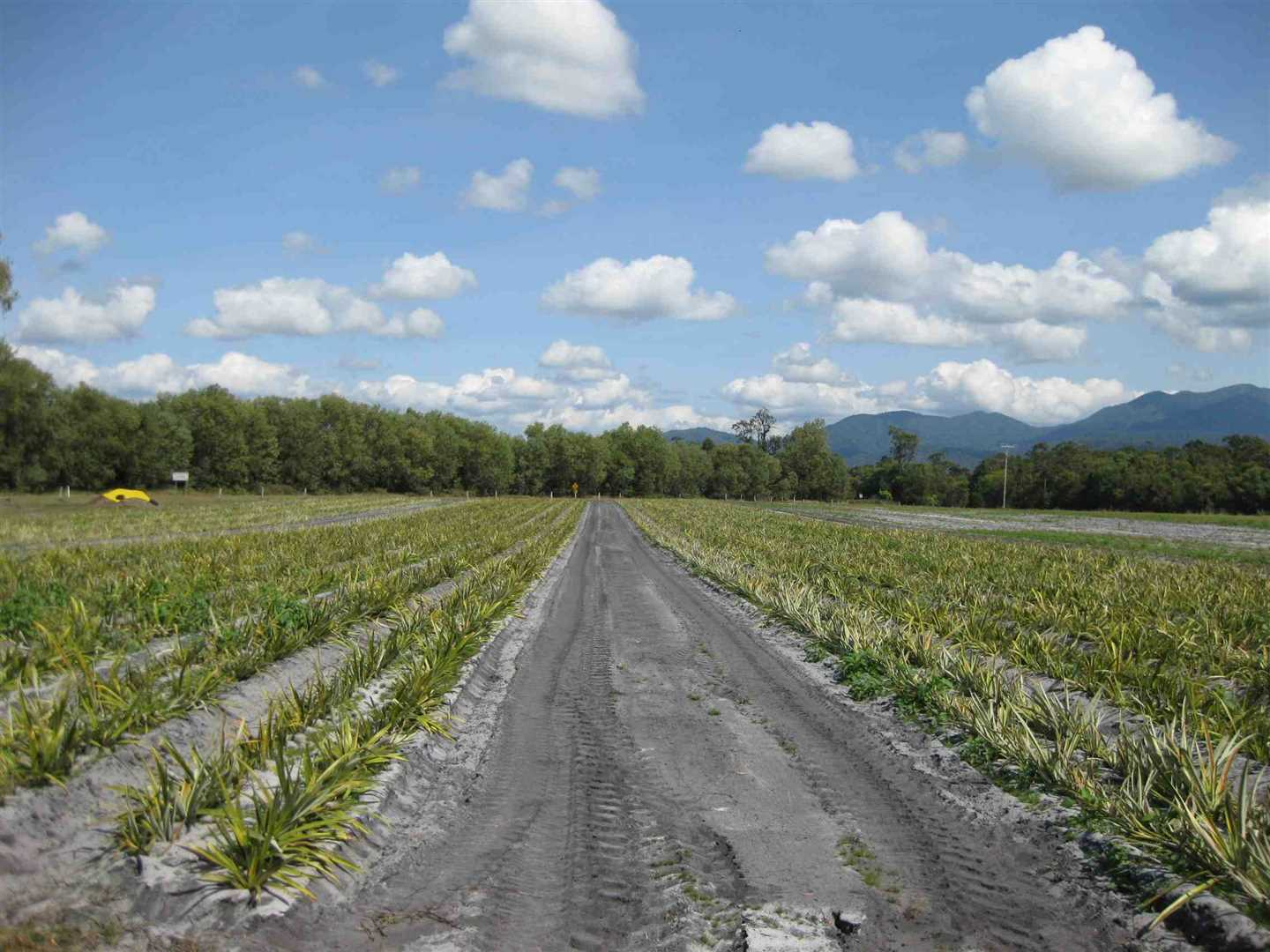 View of part of property, showing part of leased Organic pineapples being grown by the Lessee, photo 1