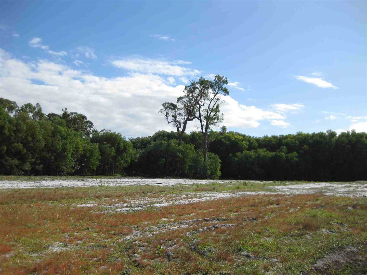 View of part of a cleared undeveloped part of the property, photo 3