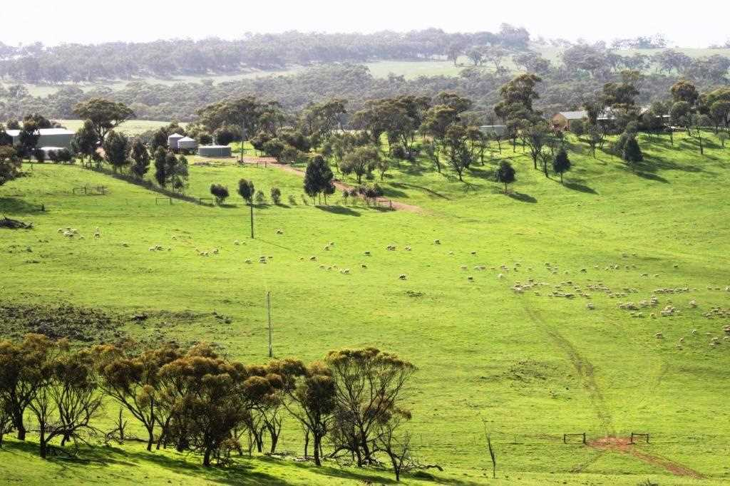 Impressive Rural Holding - 201.98 Ha 499 Ac