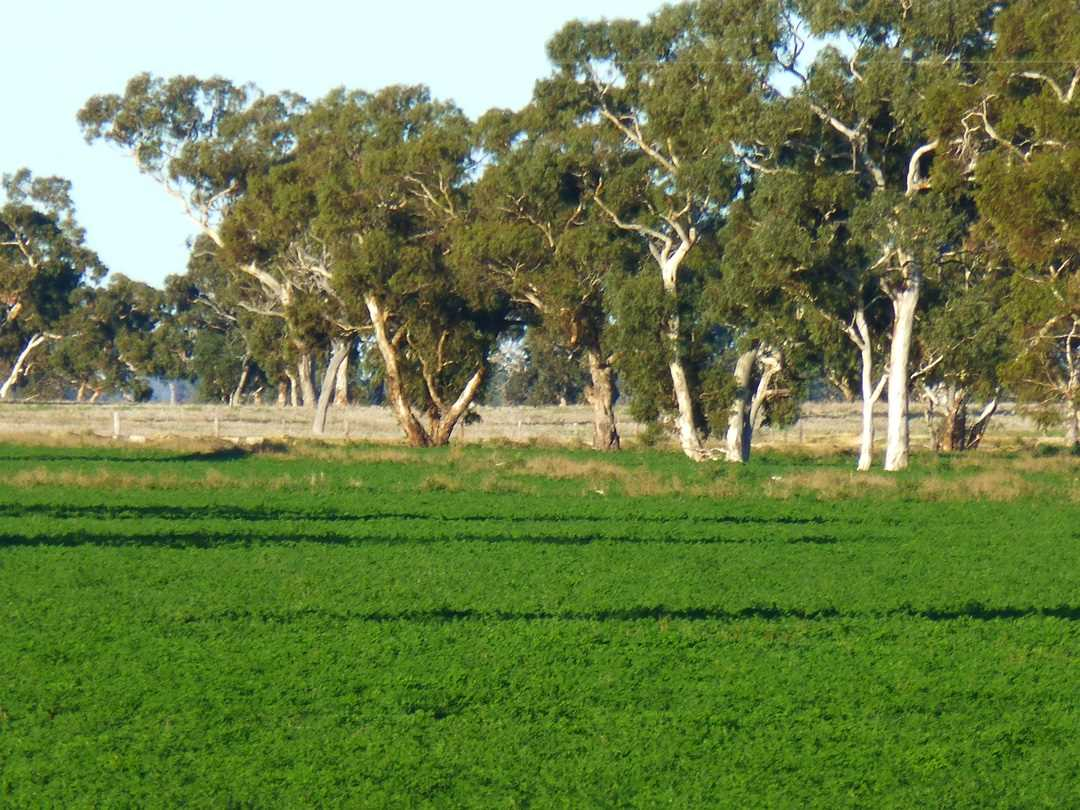 Cockatoo Downs Cropping, Grazing, Irrigation and Farm stay