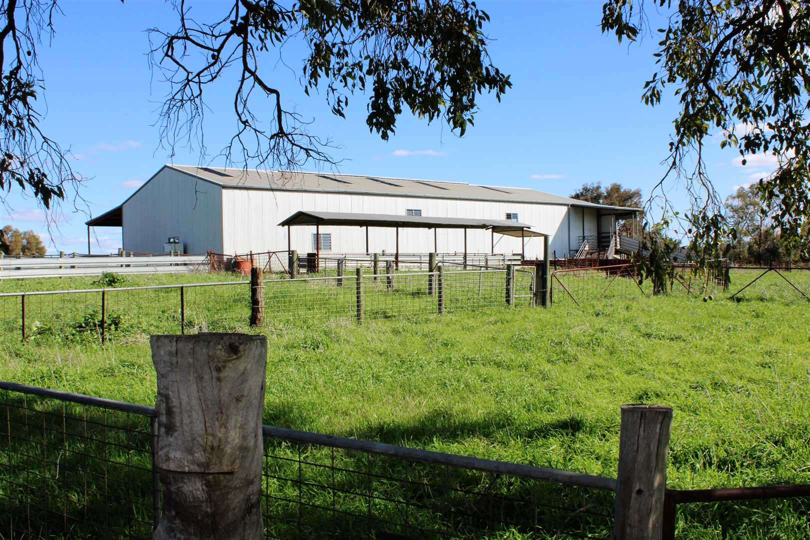 4 Stand Shearing Shed & Lunchroom on South Side