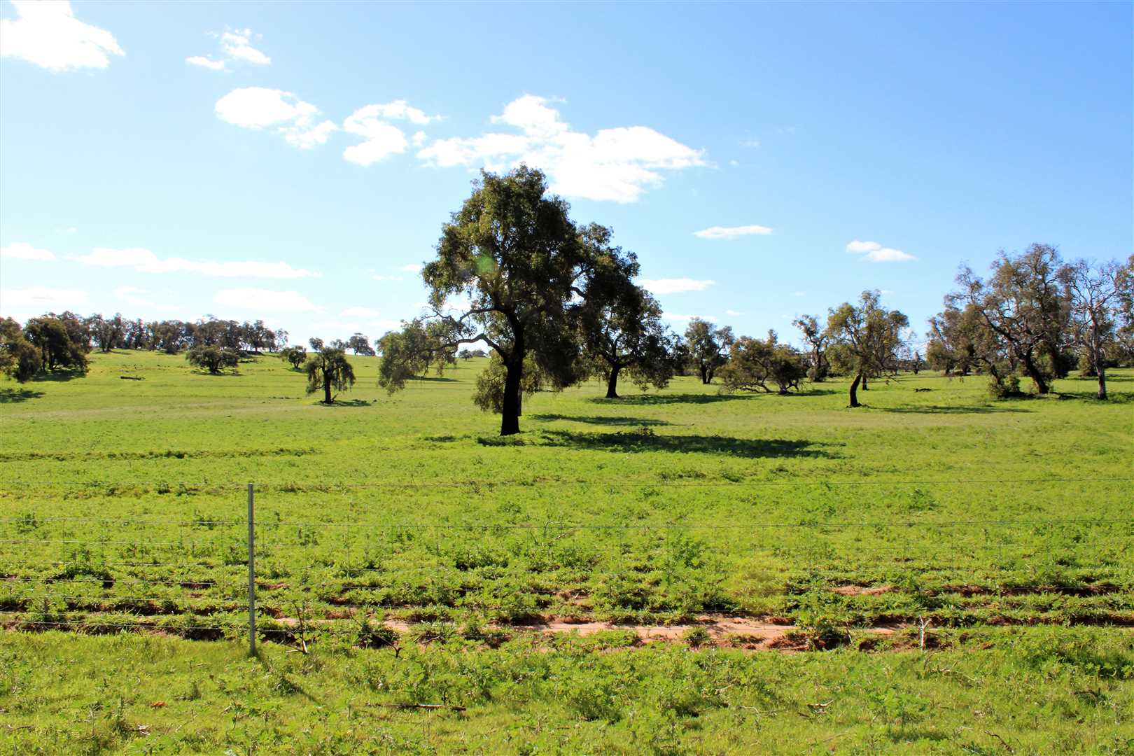 Paddocks to the North