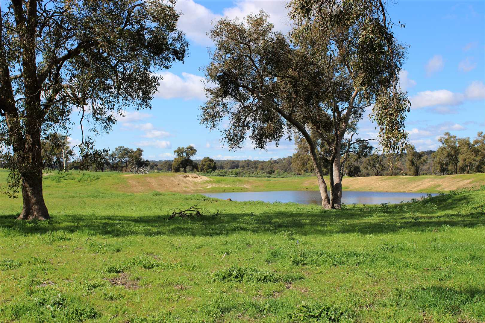 Dam at front of house, in front paddock