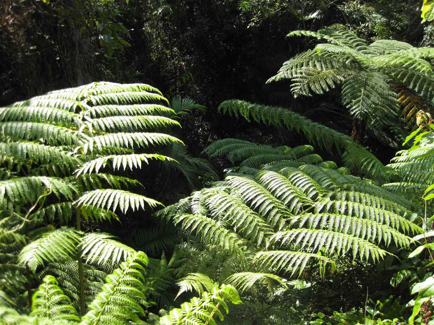 View of some tree ferns in the property