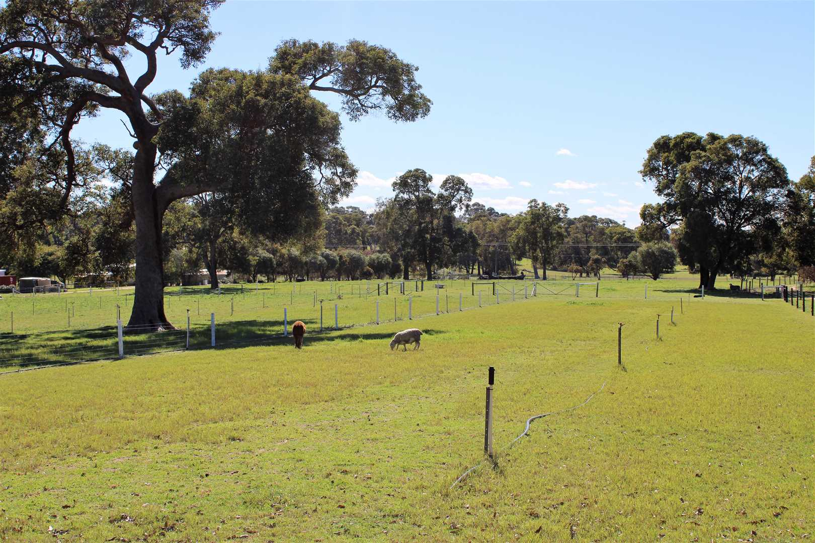 9 Paddocks with electric fencing.