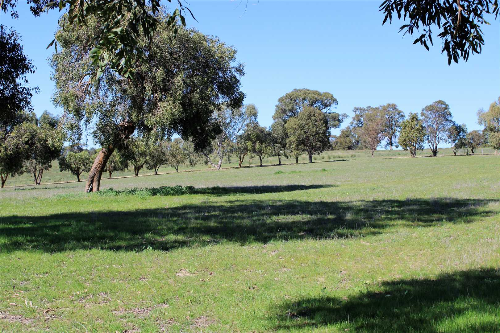 Pasture Mix seeded to Paddocks include giant couch, lucern and clovers.